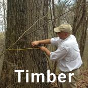 J M  Jones Lumber Company, Inc